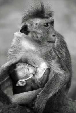 BabyMonkeyFeeding.JPG