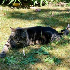 Notre chat Plume agé de dix ans