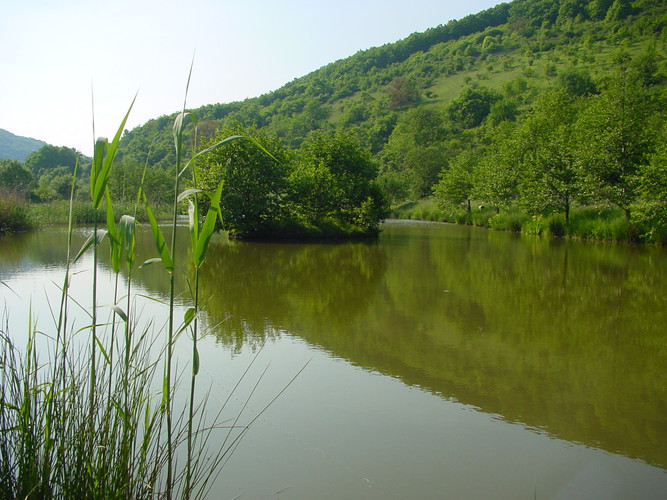 Biotop Breitenheim