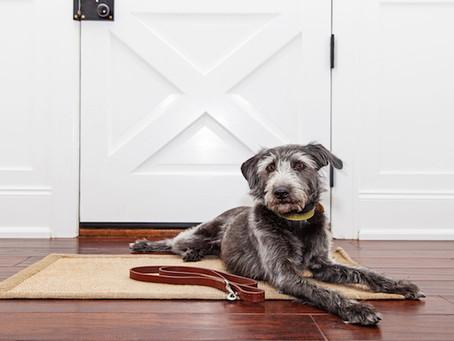 Pet Doors - From Simple to Smart