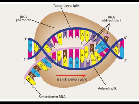 DNA YAPISI VE ANALİZİ