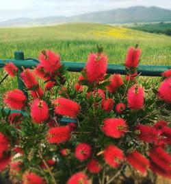 fiori rossi Villa