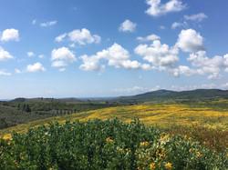 vista con fiori gialli