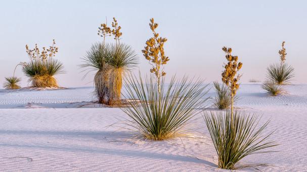 Desert palette