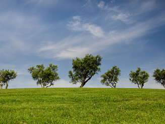 Trees: Hooked on a Feeling