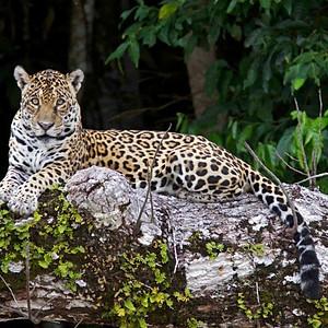 Manu National Forest