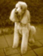 Hansi Lutz - Ola Puppy