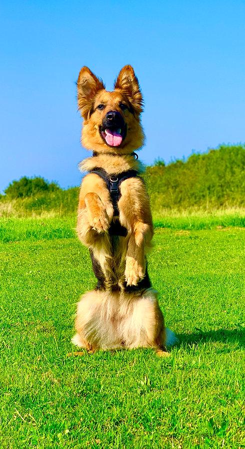 Puppy Training in Gateshead