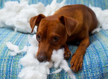5 Untrue Doggy Myths