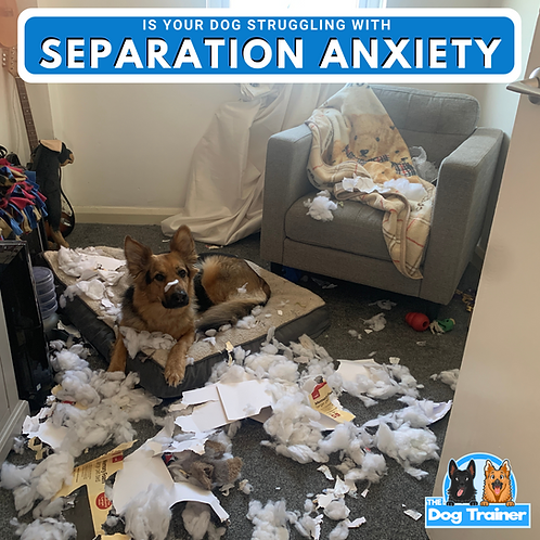 How to Resolve Separation Anxiety In Dogs - Step by Step Program