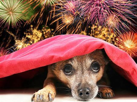 Keep Your Dog Calm This Bonfire Night