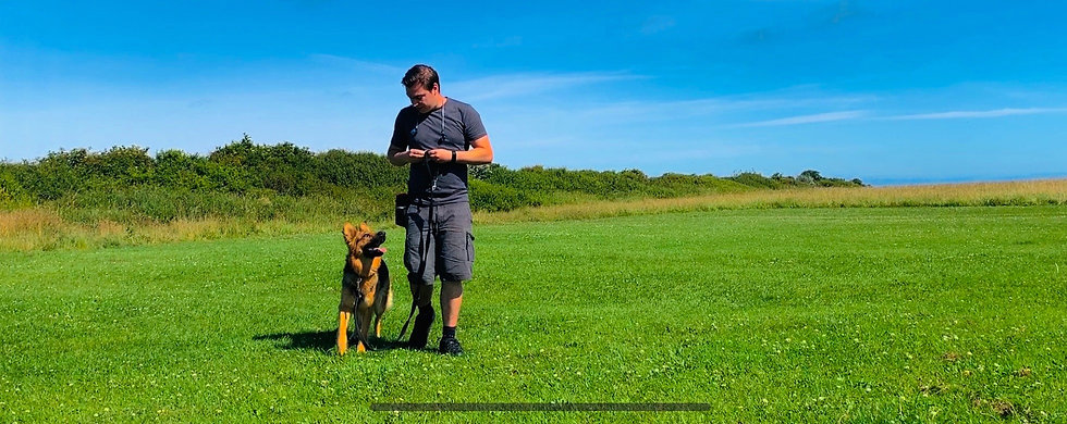 The Newcastle Dog Trainer