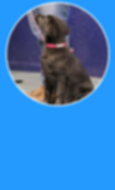 Blank Puppy.jpg