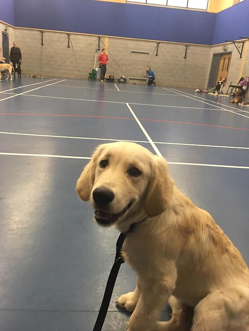 Blaydon and Newcastle Puppy Classes
