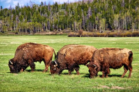 The Grand Teton National Park, Wyoming, USA