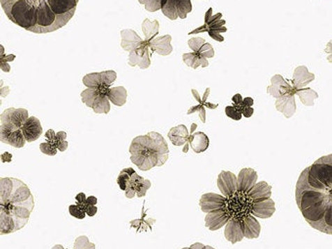 Floral Impressions White