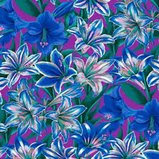 Amaryllis Blue