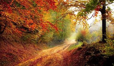 Chemin droit enforet avec des tonalités rouges et vertes.