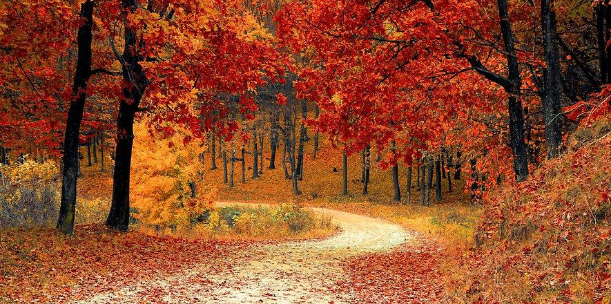 foret en automne avec des feuilles aux tons rouges et un chemin sinueux qui disparait.