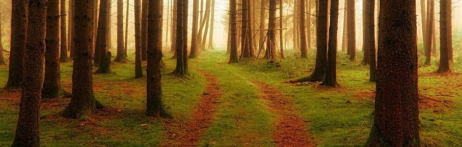 photo couleur d'un chemin qui disparait à travers des arbres.