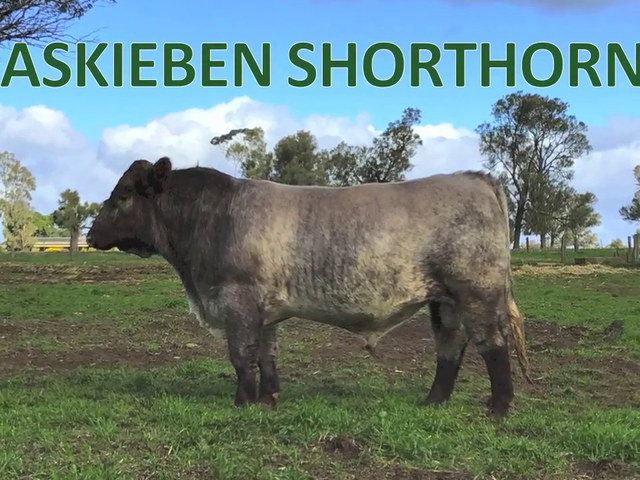Caskieben Dubbo Show and Sale Team 2017