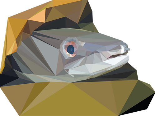 Geometric Conger Eel - Vector illustration postcard