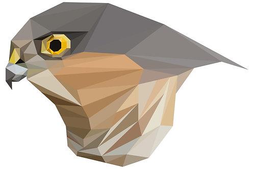 Geometric Sparrowhawk - Vector illustration postcard