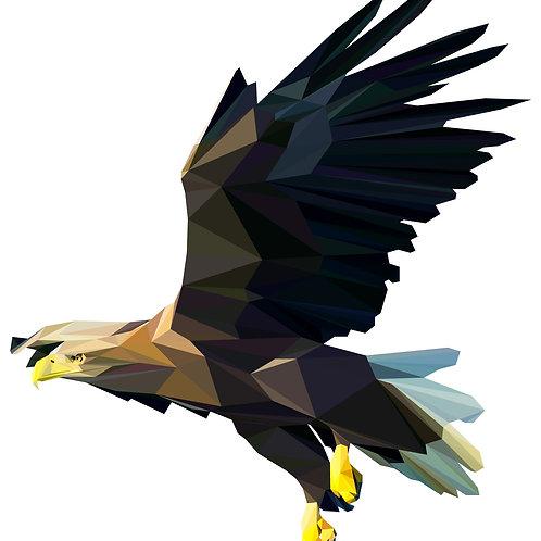 Geometric Whitetailed Eagle - Vector illustration postcard