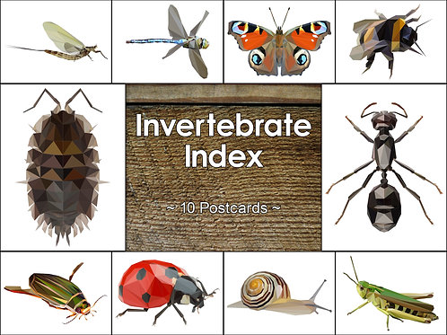 Mixed Pack of 10 Invertebrate Postcards