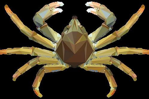 Geometric Spider Crab - Vector illustration postcard