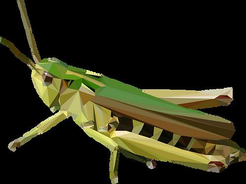 Geometric Grasshopper - Vector illustration postcard