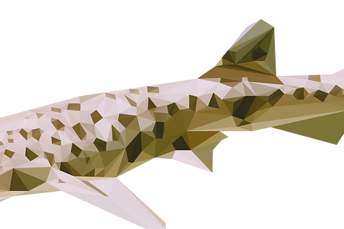 Geometric Dogfish - Vector illustration postcard