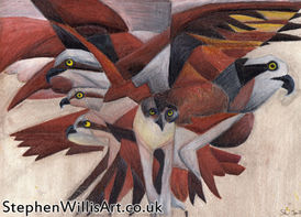 Cubist Ospreys