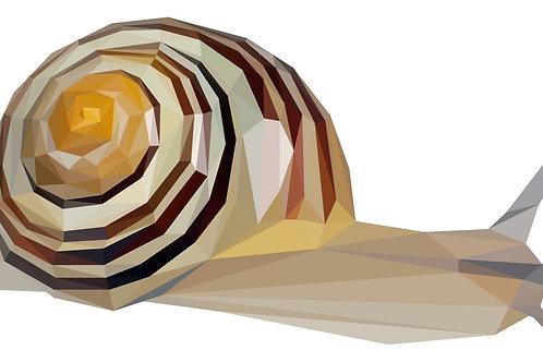 Geometric Snail - Vector illustration postcard