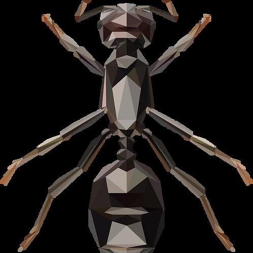 Geometric Ant - Vector illustration postcard