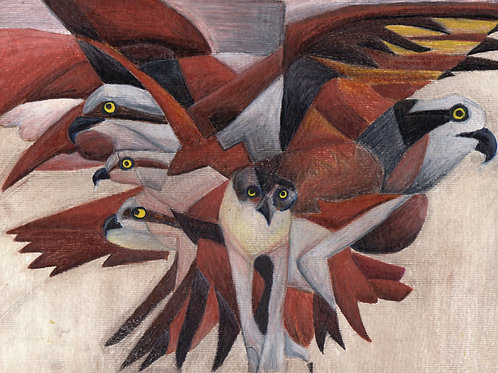 Ospreys - Fine art postcard