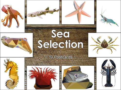 Mixed Pack of 10 Sealife Postcards