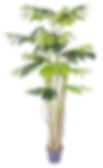 Monstera%20Plant_edited.png