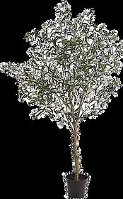 Olive Plant