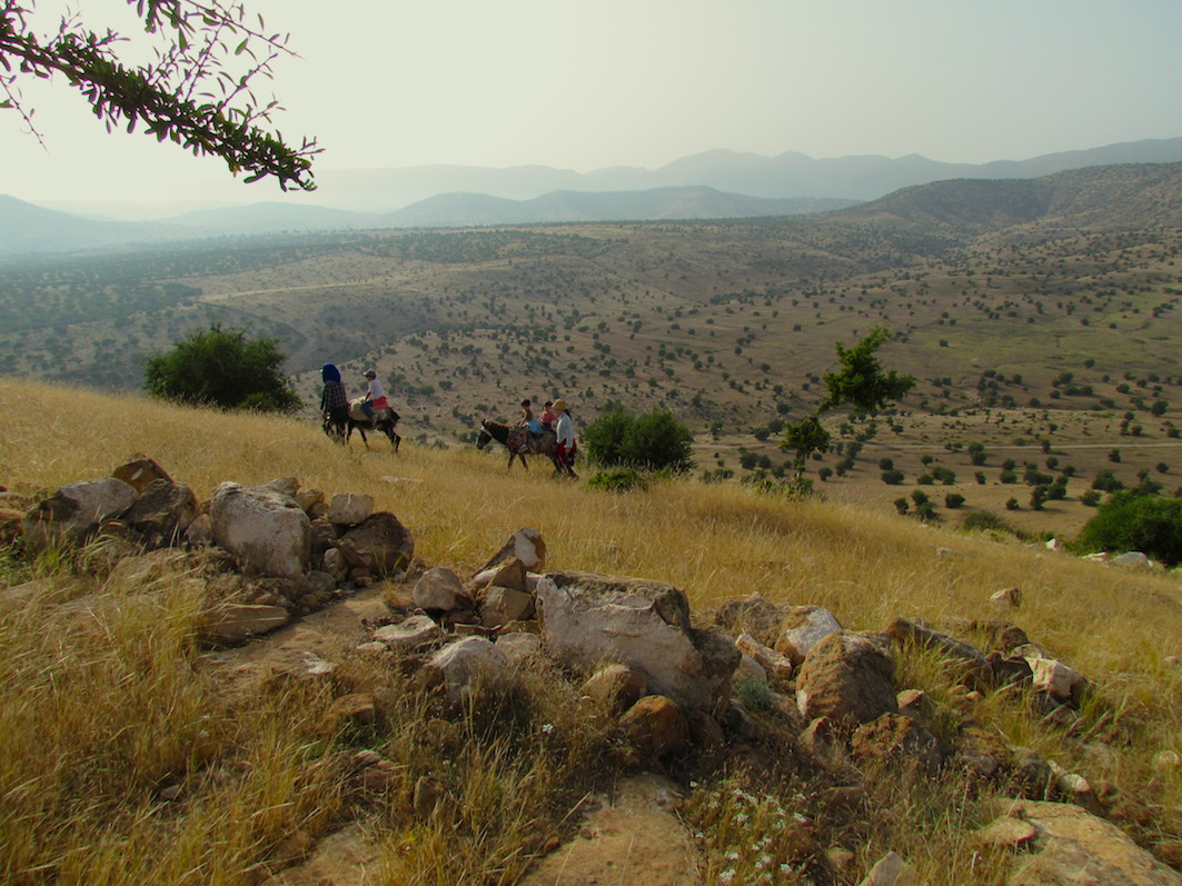 Donkey-ride in the Argan forest