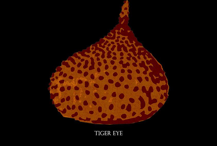 tiger eye .jpg