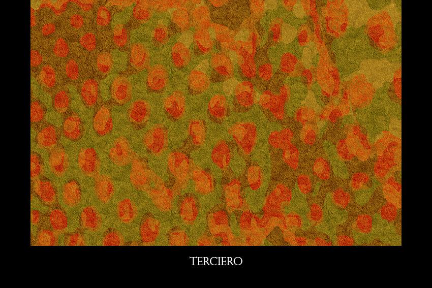 TERCIERO.jpg