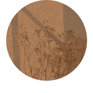 shadow2.png