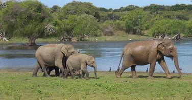 Yale Nasjonalpark, Sri Lanka, Mithudama Travel