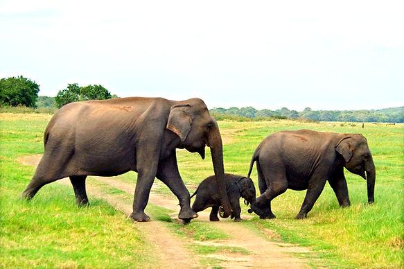Safari - Udawalawa.