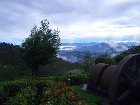 Nuwara Eliya, Te-Plantasje, Sri Lanka, Mithudama Travel