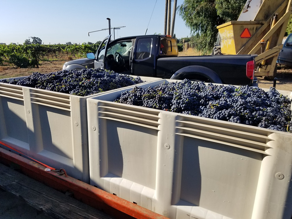 Picking up the grapes from Todd Maley's vineyard