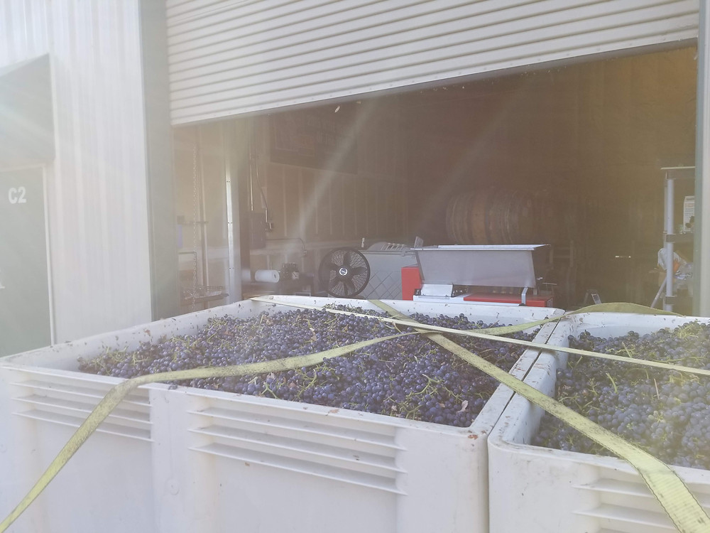 Malbec delivered, the crusher is right behind the trailer