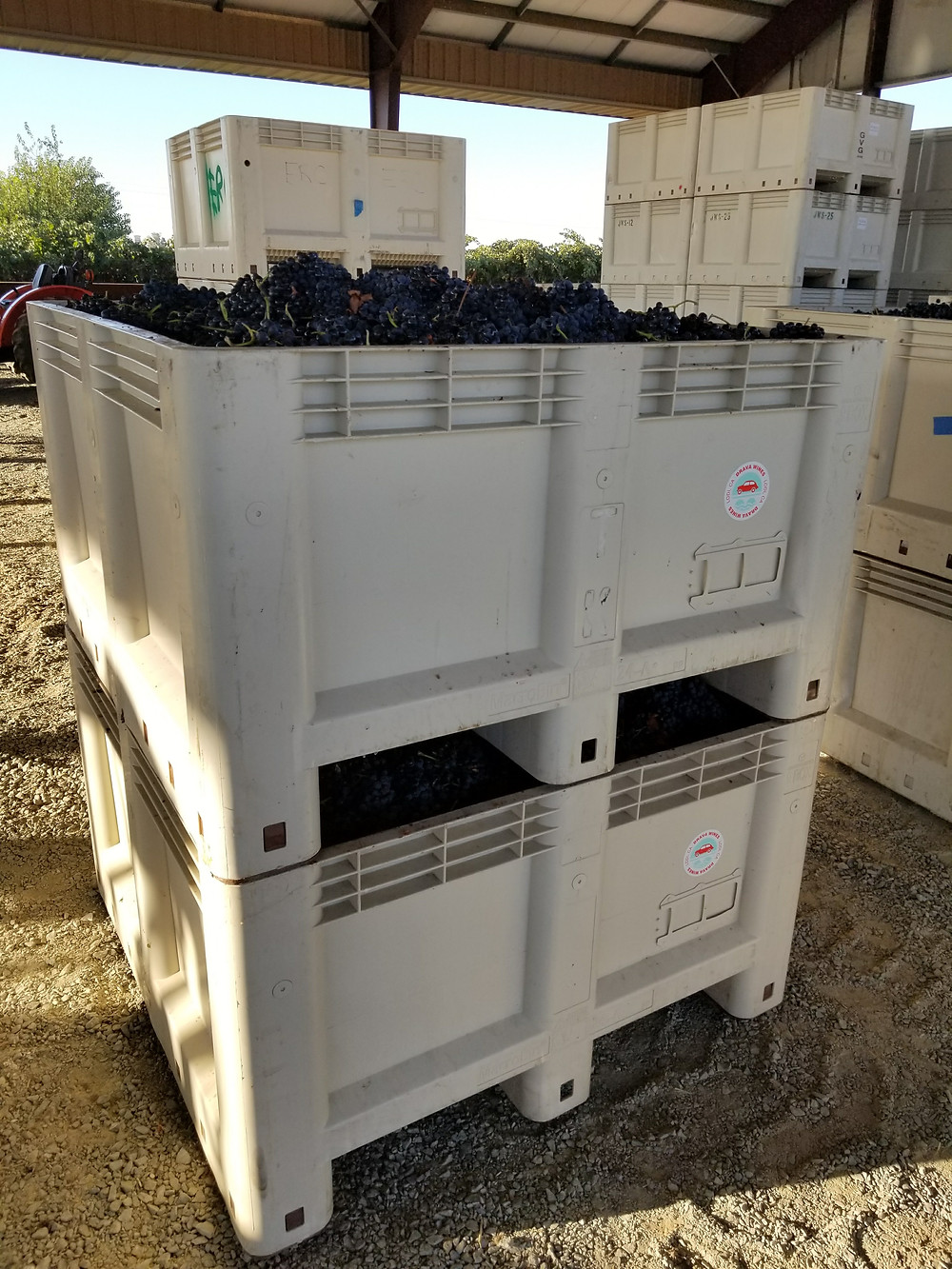 Our Tempranillo bins ready to be picked up at Ron Silva's vineyard.