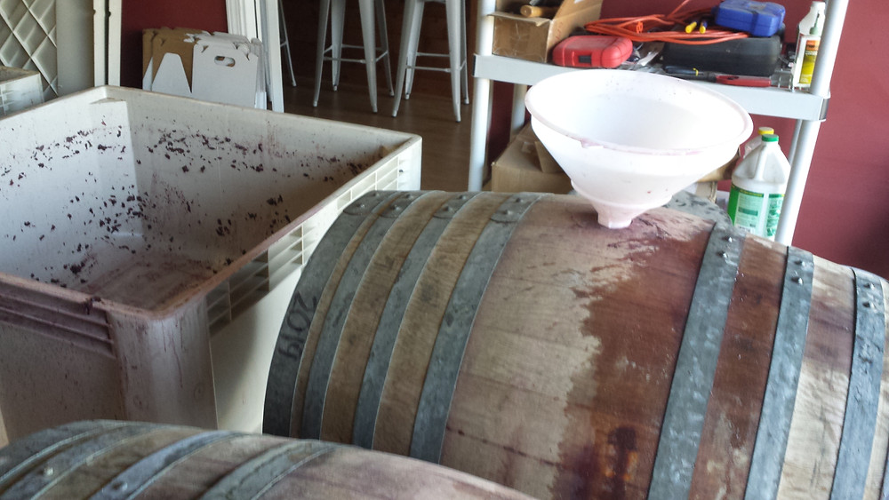 Filling barrels after pressing the wine